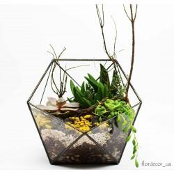 Флорариум: Basket maxi