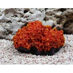 Искусственный коралл Trixie 15см