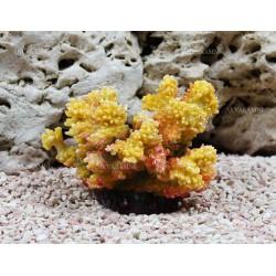 Искусственный коралл Trixie 12см