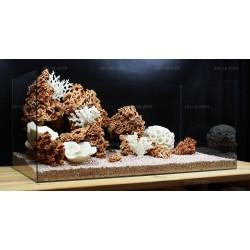 Композиция из Spaghetti и кораллов (от 180л)