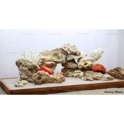 Композиция для псведоморя с кораллами (от 160л)