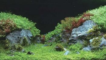 """""""Лесной стиль"""" для небольшого аквариума"""