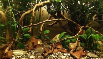Биотопный аквариум