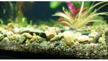 Гравий и песок в качестве грунта для аквариума