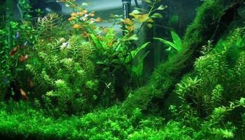Грунтопокривні рослини в акваріумістики