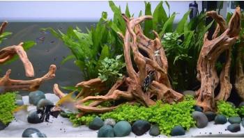 Уникальный дизайн аквариума с корягами